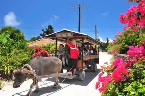 白砂のサンゴの道を行く水牛車(イメージ)