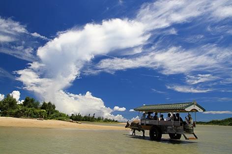 ゆらゆら揺られ水牛車にて由布島へ(イメージ)
