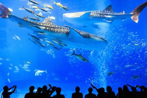 沖縄_美ら海水族館(イメージ)