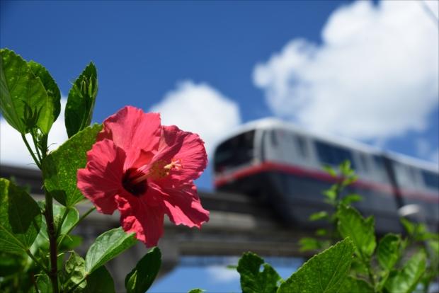 沖縄のモノレール「ゆいれーる」をバックに、青い空に向かって咲くハイビスカス