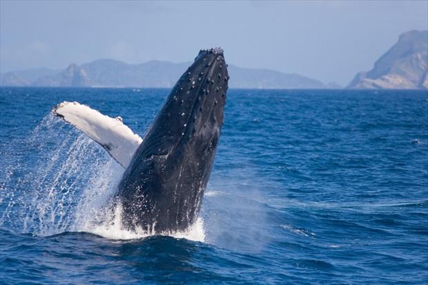 冬の沖縄の海はこうやって楽しもう!
