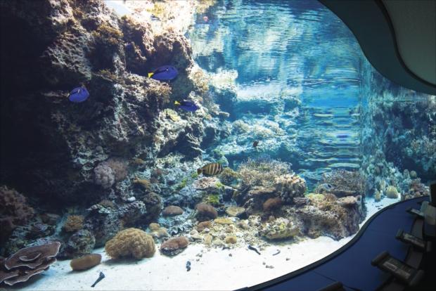 時間に余裕があるなら、沖縄の海や魚のことをより深く理解できるプログラムの参加も。