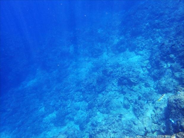 青白い光が海底を照らす幻想的な風景が広がる