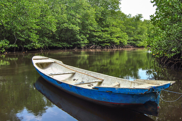 マングローブとボート