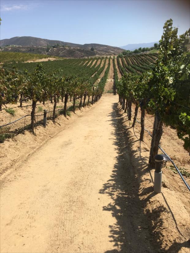 西海岸の乾いた強い日差しがワインを作る。