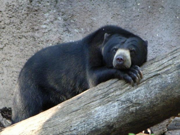 暑い日中は、のんびりとくつろいでいる動物が多め (写真提供:浅井みらのさん)