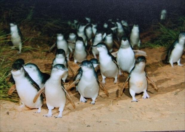 何も見えない暗闇から続々と登場するリトルペンギン