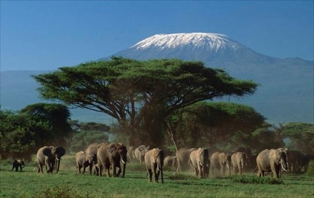 ケニア3大ハイライトの1つ・アンボセリ国立公園