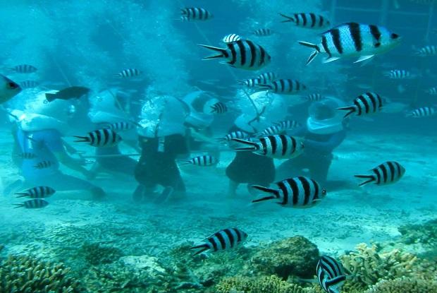 シーウォーカーでハワイの海を散策。顔面すれすれに魚が泳ぎ、まるで竜宮城のような景色