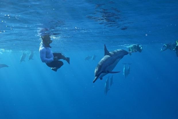 イルカが棲む聖地と呼ばれる、オアフ島のウエストコースト