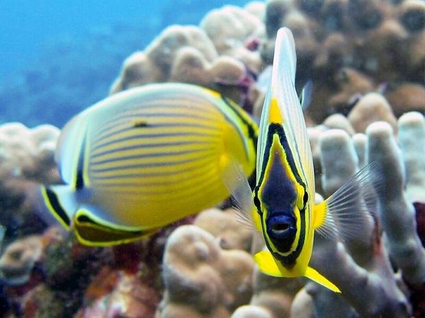 無人島のモロキニ島は海洋生物保護区にも指定されている