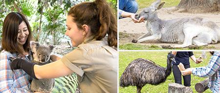 コアラ抱っこ以外に餌やり体験、シープドッグショーも