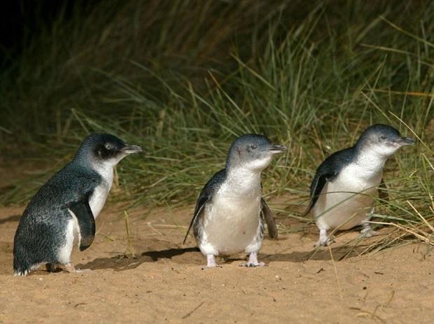 ペンギンが近い観覧席へのアップグレードがおすすめ