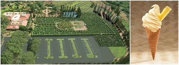 全長4kmの巨大迷路にチャレンジ! 「ドールホイップ」はパイナップル味のソフトクリーム(画像提供:ハワイ州観光局)