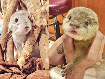 Best Animal Cafes In Harajuku Tokyo Tokyo Tourist Information Center His