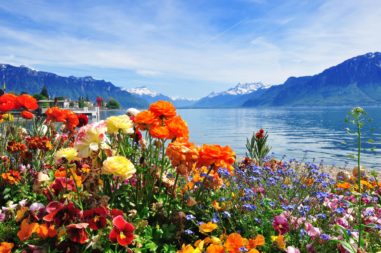 「スイス」の画像検索結果