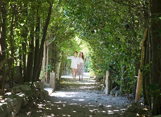 沖縄_備瀬のフクギ並木