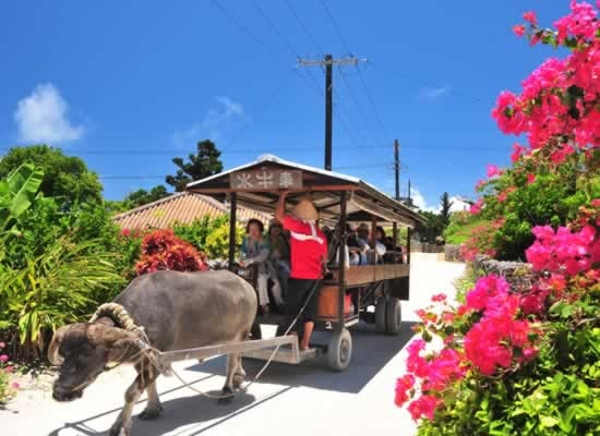 白砂のサンゴの道を行く水牛車/イメージ