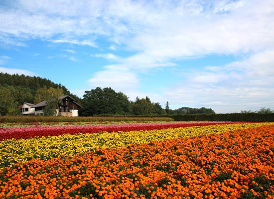 ファーム富田・秋の彩利の畑(イメージ)