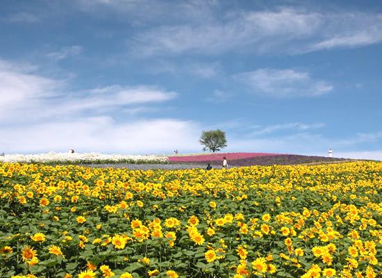 四季彩の丘(イメージ)