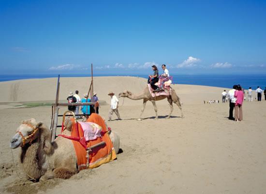 鳥取砂丘とラクダ
