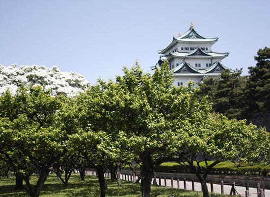 愛知県/名古屋城(イメージ)