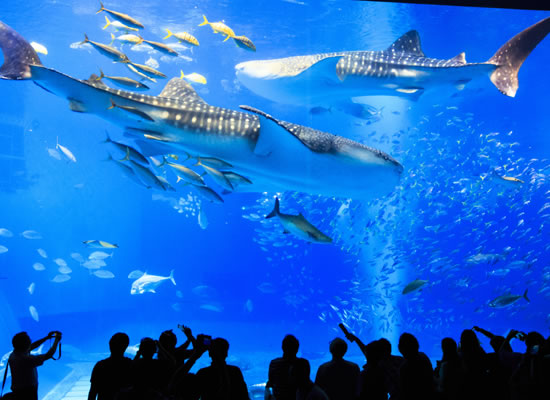 沖縄_美ら海水族館