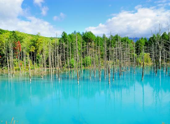 美瑛 青い池(イメージ)