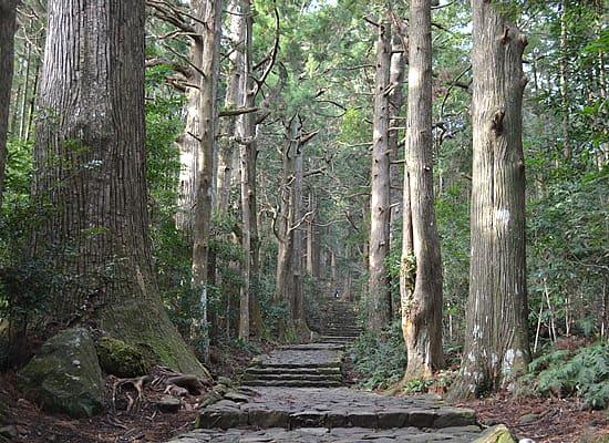 和歌山県/熊野古道(イメージ)