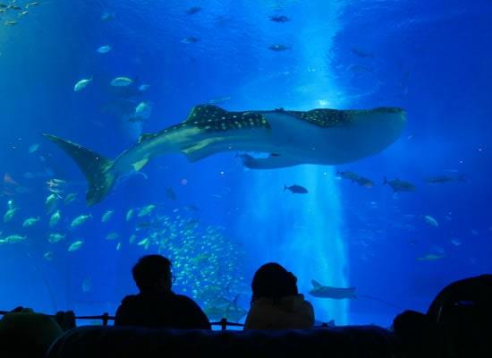 沖縄美ら海水族館(イメージ)