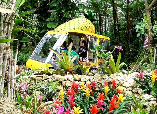 沖縄_ナゴパイナップルパーク