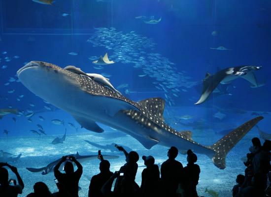 美ら海水族館(イメージ)