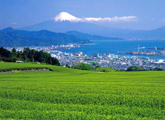 静岡県/日本平(イメージ)