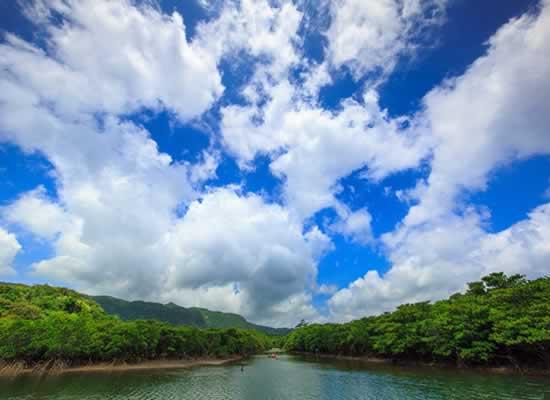 西表島マングローブ(イメージ)