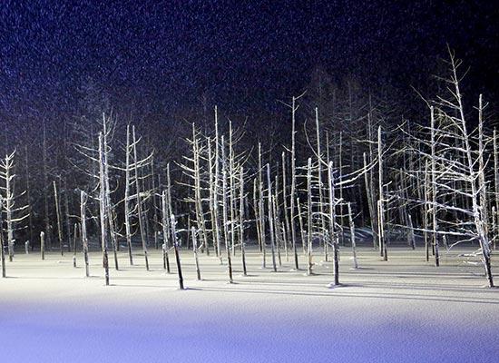 青い池ライトアップ(イメージ)