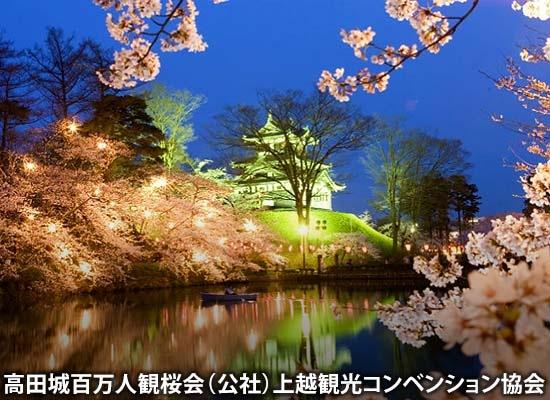 新潟_上越 日本三大夜桜 高田城百万人観桜会(イメージ)