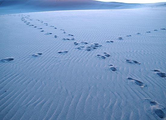 冬の鳥取砂丘(イメージ)