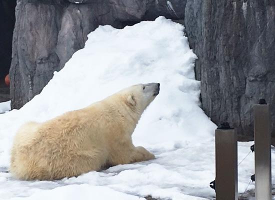 旭山動物園/イメージ