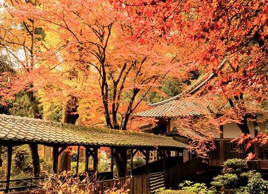 福岡から車で約40分!人気の観光地『福岡の糸島』(イメージ)