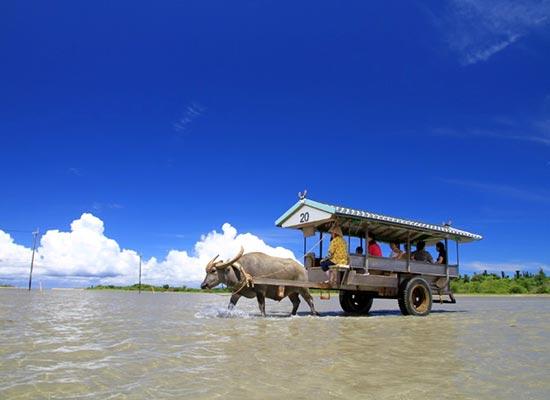 水牛車で海を渡って由布島へ/イメージ