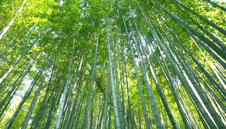 嵐山・竹林