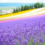 北海道旅行に必要な持ち物は?春夏秋冬、季節ごとに紹介